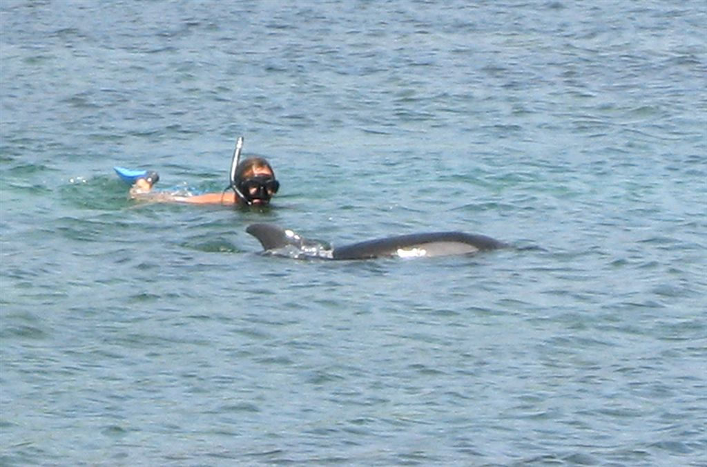 Snorkeling Alghero